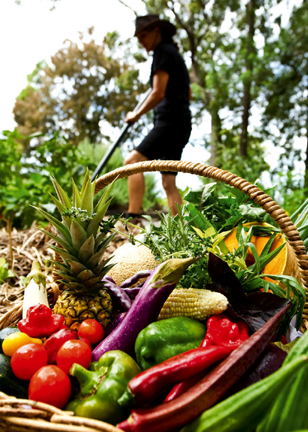 Basket of fruit and veggies in the garden